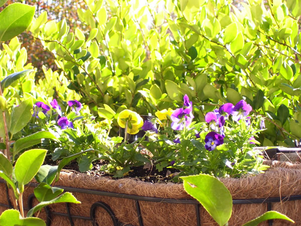 Raleigh floriculture