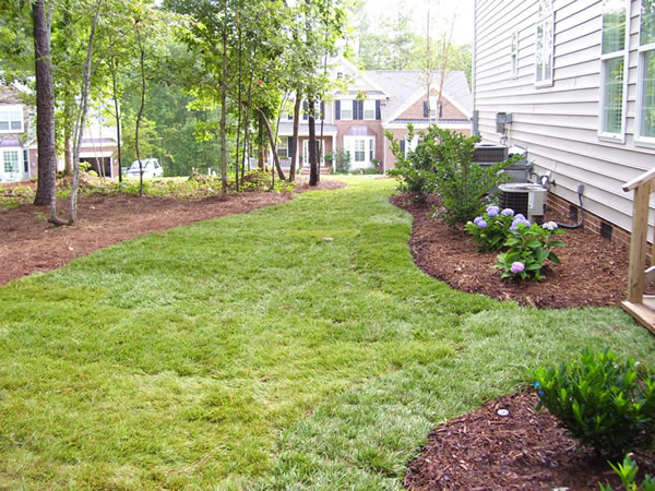 Lawn Cleanup Raleigh
