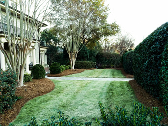 Landscape Maintenance Raleigh