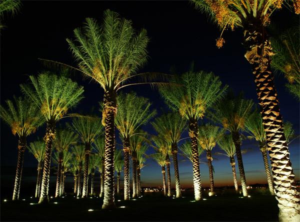 Tree lighting Raleigh