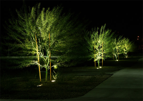 Tree lighting designs Raleigh NC