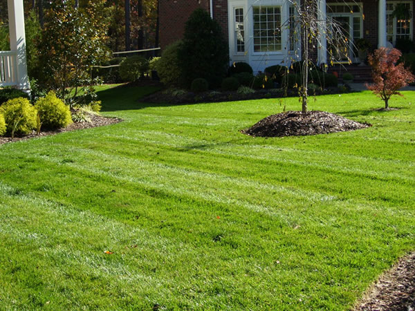 New lawn installation Raleigh NC